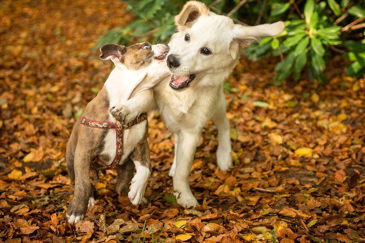 Bekijk onze lijst van 30 super leuke honden foto's uit de maand november 2016. Al deze 30 honden foto's zijn geschoten door een professionele fotograaf.