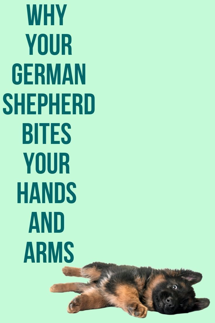 Why Does My German Shepherd Bite My Hands And Arms In 2020