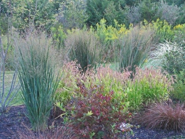 17 best images about horticulture grasses for zones 2 3 for Ornamental sea grass
