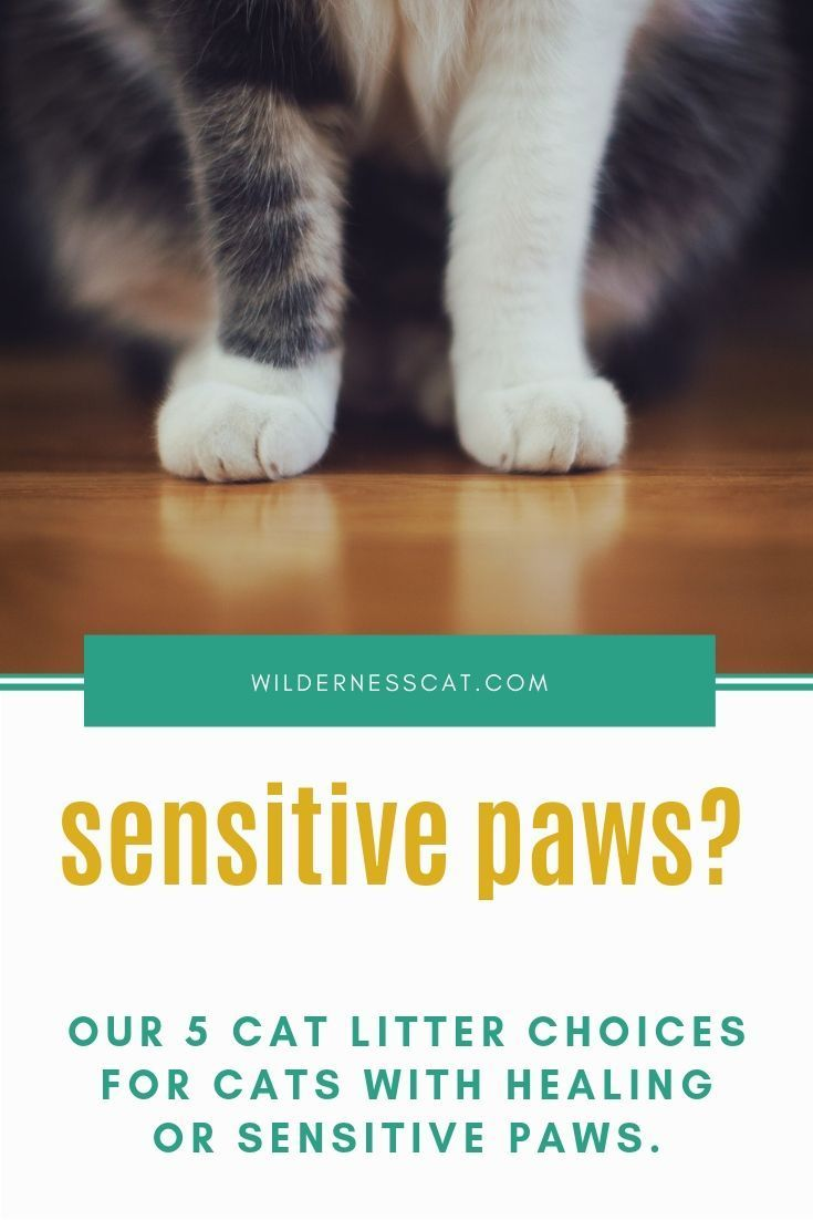 Best Cat Litter For Sensitive Paws Wildernesscat Best Cat Litter Cat Litter Cat Training