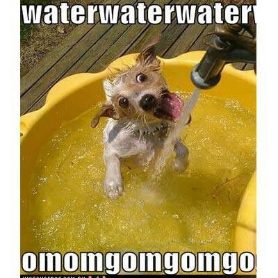 Give your pets plenty of water this summer!