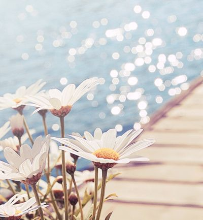 Daisies and the sea.