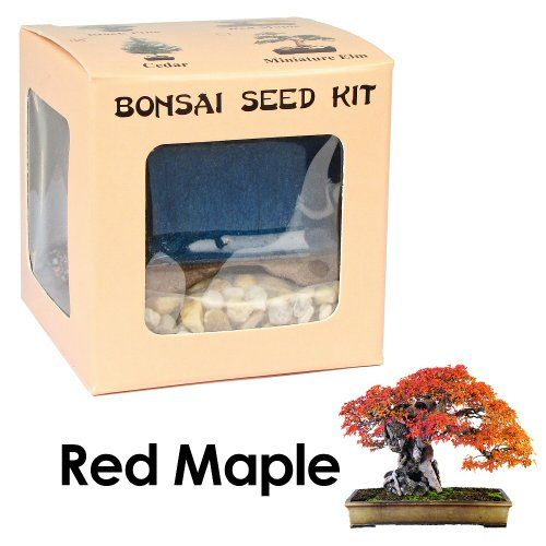 Eve's Red Maple Bonsai Seed Kit, Woody, Complete Kit to Grow Red Maple Bonsai from Seed Eve's Garden, Inc,http://www.amazon.com/dp/B0049VPI58/ref=cm_sw_r_pi_dp_S4YWsb0FBXX7FTXE