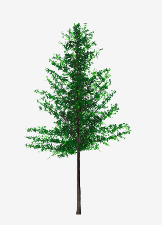 Simulation Of Large Tree Pine Png Pattern Big Tree Pine Tree Artificial Tree Png Transparent Clipart Image And Psd File For Free Download Watercolor Tree Big Tree Artificial Tree