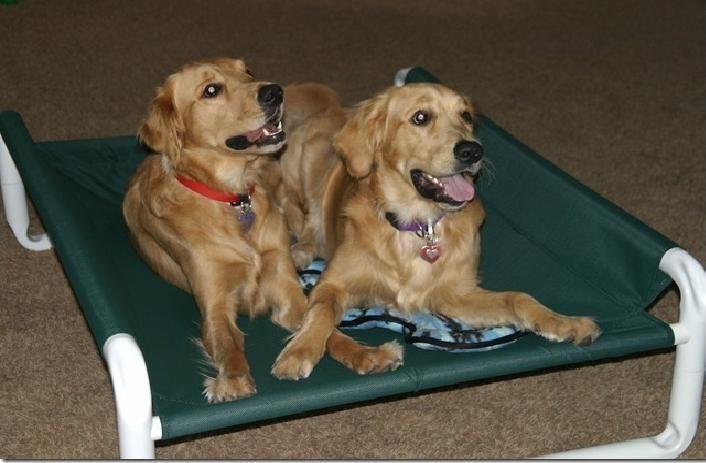 7 best Pet Cots images on Pinterest   Biggest dog, Largest ...