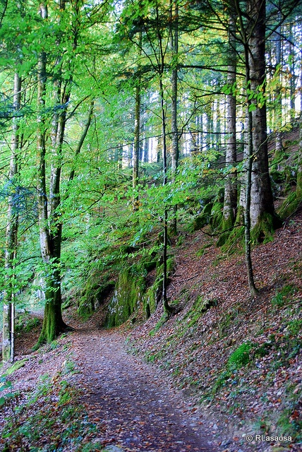 Hiking Selva de Irati - Otoño   Navarra   Spain