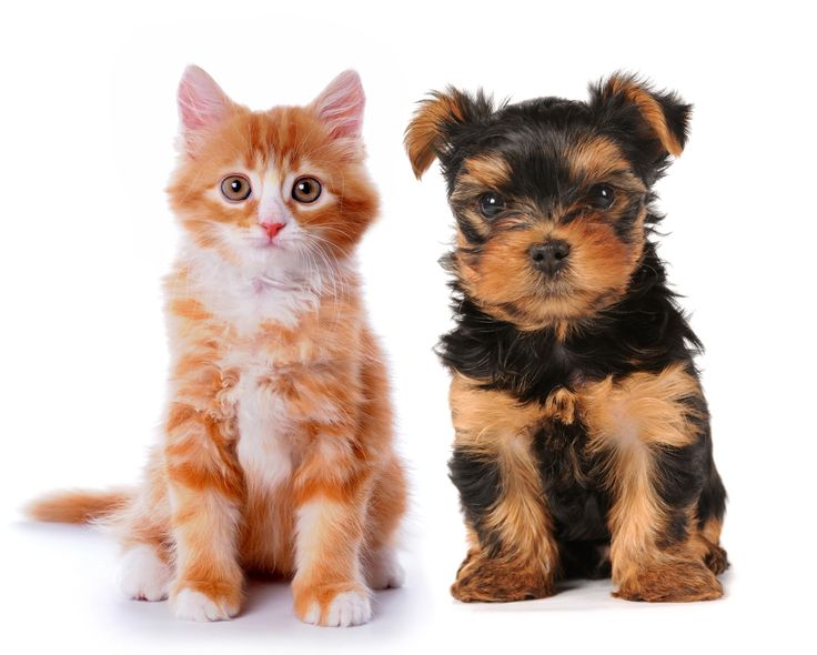 Ginger Kitten and Cute Puppy http://www.dividedback.com/