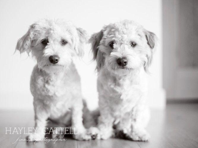 Pet Dog Portraits Photography Hayley Cattell Fine Art Photographer