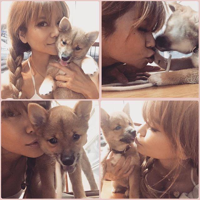 S級ヤンチャ坊主🐾ゴン🐕💗 我が家に来て41日🏠毎日しれ〜っと大きくなってきてますww 私には怒られっぱなしの為、私より彼にベッタリなゴン😂そんなとこも愛しいっ💗  #shibaken #柴犬#豆柴#dog#puppy #pet #shibuya #生後3か月半 #love#doglife #dogstagram #たぬき顔 #愛犬#dogs #puppylove#犬#柴#family #cute#shibamania