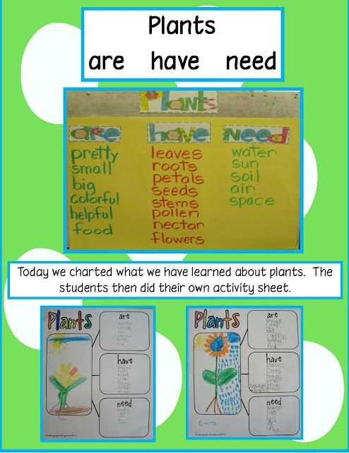 Free activity sheet and labels! Plants are/have/need brainstorming before, during, after narcissus bulb unit