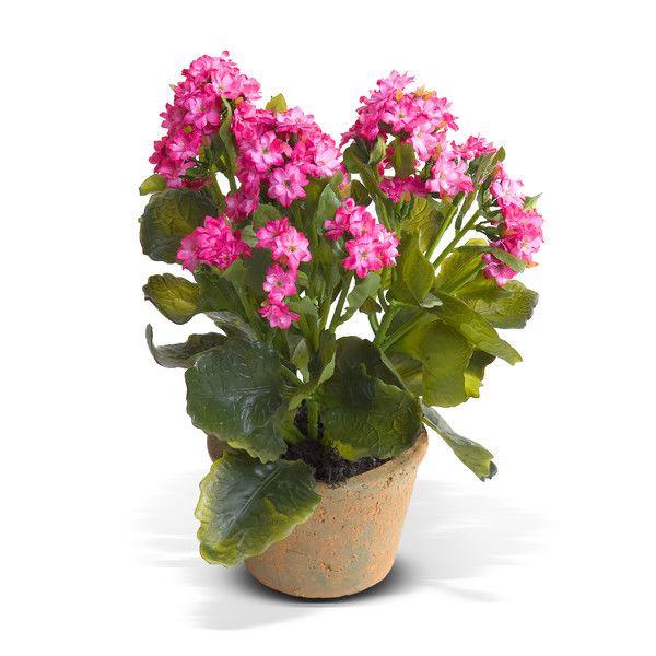 Kalanchoe Plant Care Instructions