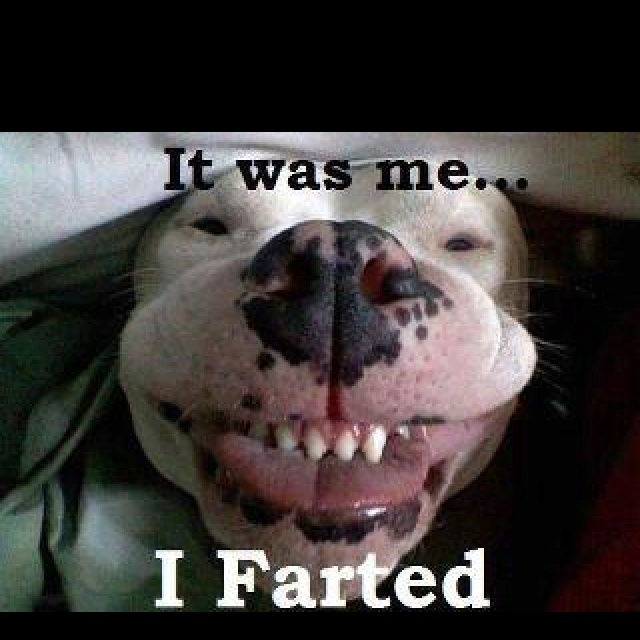 Cats Farting On Dogs