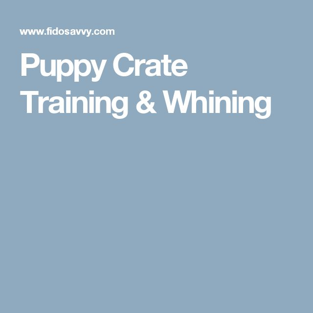 Puppy Crate Training & Whining