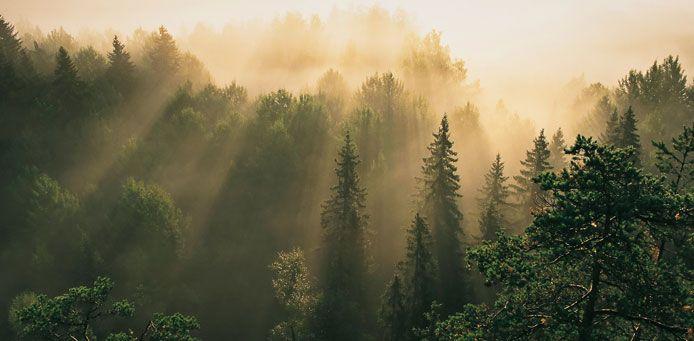 Nuuksion kansallispuisto - Luontoon.fi