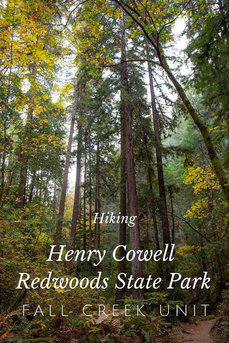 Hazy Hike at Henry Cowell Redwoods State Park, Fall Creek Unit | 22 Henry Cowell State Park Hiking on shady state park, rv park, calaveras big trees state park, wilder ranch state park, morro bay state park, butano state park, castle rock state park, kodachrome basin state park, samuel p. taylor state park, portola redwoods state park,