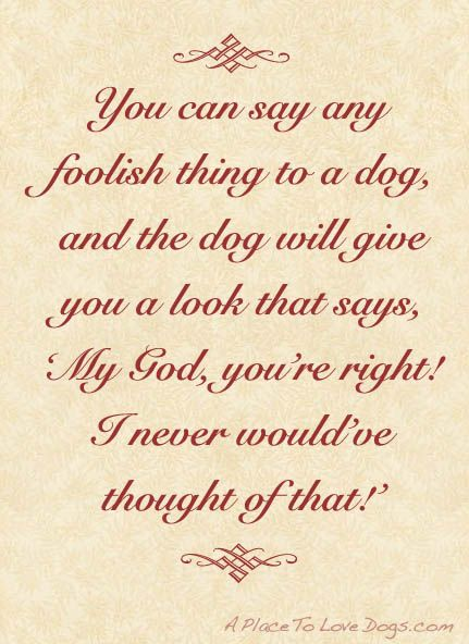 .: Dogs Quotes, Best Friends Love, Unconditional Love, Dogs Stuff, Baby Dogs, I Love Dogs, True Stories, Love My Boys, Haha So True