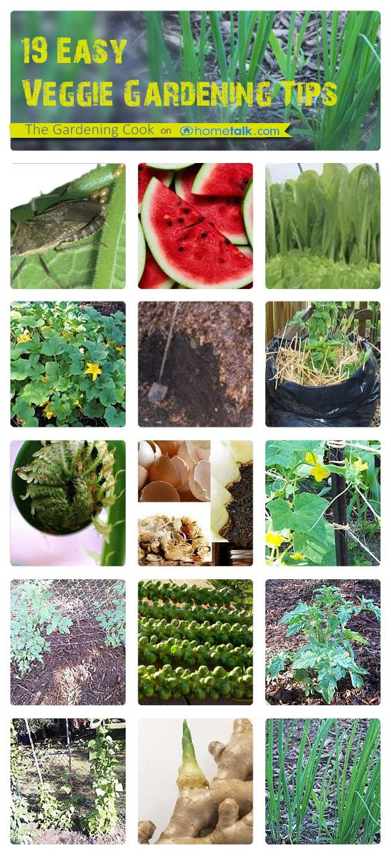 19 Veggie Garden Tips that you need to know - frugal, easy and effective ways to make your vegetable garden a success - http://thegardeningcook.com/19-easy-vegetable-gardening-tips/