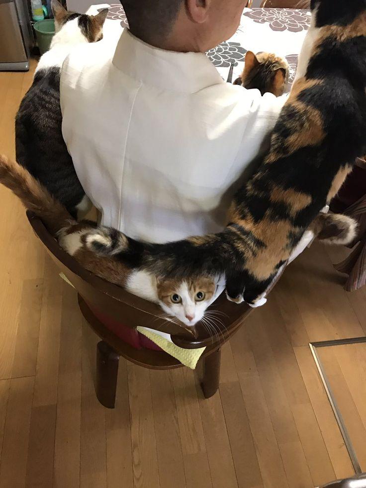 住職の椅子にぎゅうぎゅう詰め ご飯時におすそ分けを待つお寺の猫が可愛いと話題に - エキサイトニュース