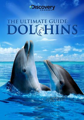 Dolphins: The Ultimate Guide: Ultimate Guide, Kindergarten Homeschool,  Grampus,  Sea Wolf, Netflix Watches, Ocean Animal, Homeschool Ocean, Maple Dolphins, Dolphins Adventure