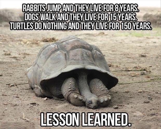 Lesson From A Turtle