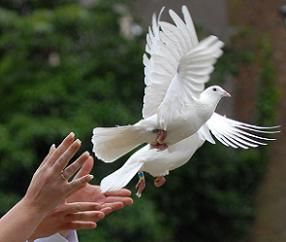 Doves symbolize peace, love, innocence, and purity. Two doves can sometimes be used to symbolize a partnership of those things, but is not necessary. A dove can also represent the Holy Spirit, after the Dove carrying the olive branch to Noah on the Ark, telling him the flood had ended.