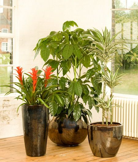 Lovely Indoor Plant Pots Of Different Varieties, That You Can Place Your  Houseplants In, Will Help You Elevate The Aesthetic Appeal Of Your Living  Space.
