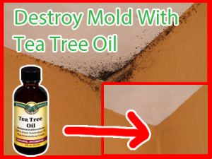 How To Naturally Remove Mold With Tea Tree Oil | Herbs And Oils