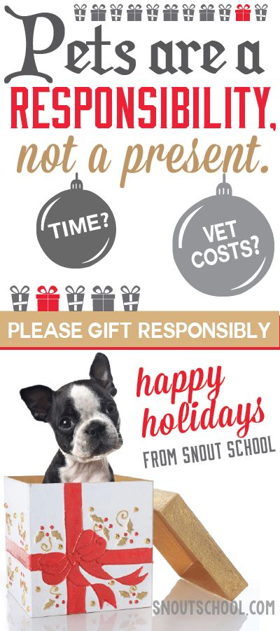 Any veterinarian or vet tech should remind veterinary clients that pets aren't presents this holiday season! (Even this cute Boston terrier...) More about educating pet parents at www.snoutschool.com