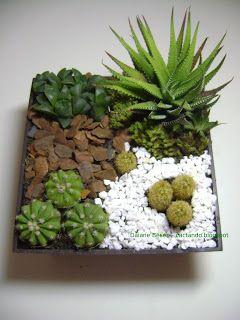 Mini jardins e terrários - cactos e suculentas: Maio 2013
