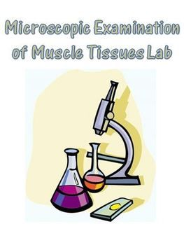 This Microscopic Examination of Muscle Tissue Lab is part of my Muscular System unit that covers muscle anatomy and function in the human body. This lab is very flexible as it will work for any level student from English Learner - EL - to more advanced students.  $