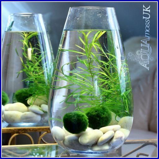 Planted vase