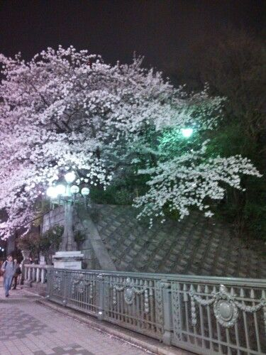 Spring 2016 四ッ谷