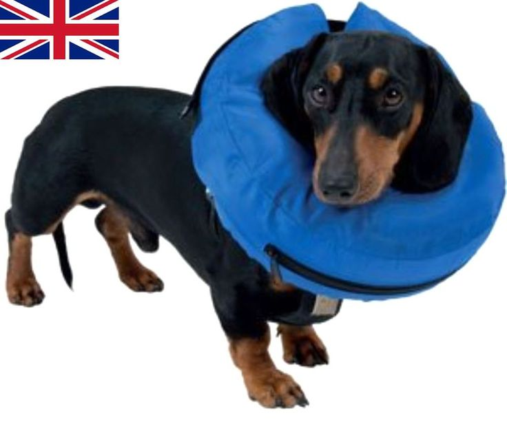 Buster Inflatable Collar, M in Pet Supplies, Dog Supplies, Collars | eBay
