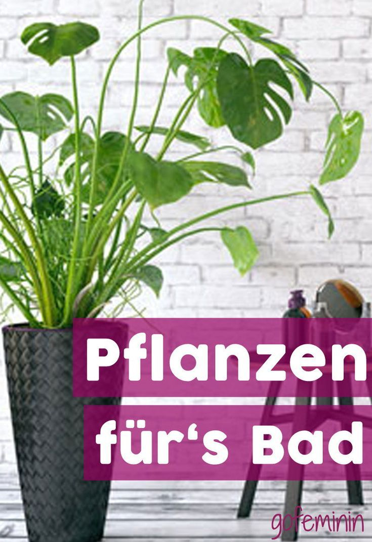 Indirect Light High Humidity These 7 Plants Are Perfect For The Ba Home Decor Badkamer Planten Planten Licht