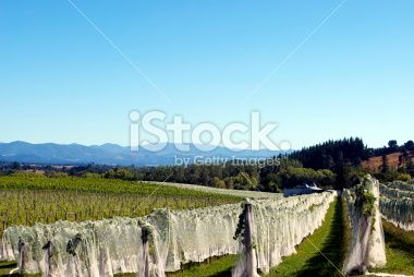 Rural Vineyard Scene, Moutere, New Zealand Royalty Free Stock Photo