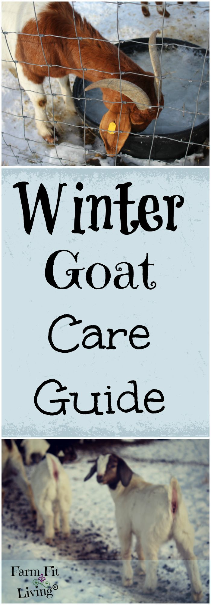 Winter Goat Care Guide for a Healthy HerdFarm Fit Living | Mindy Young + Rural Living + Homesteading + Business + Recipes + Wellness