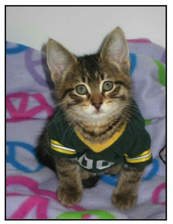 Nice green bay packers cat jersey