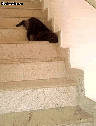 people melting gifs | Melting cat | HilariousGifs.com