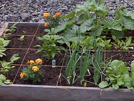 17 best images about small vegetable garden ideas on for Planting a small vegetable garden layout