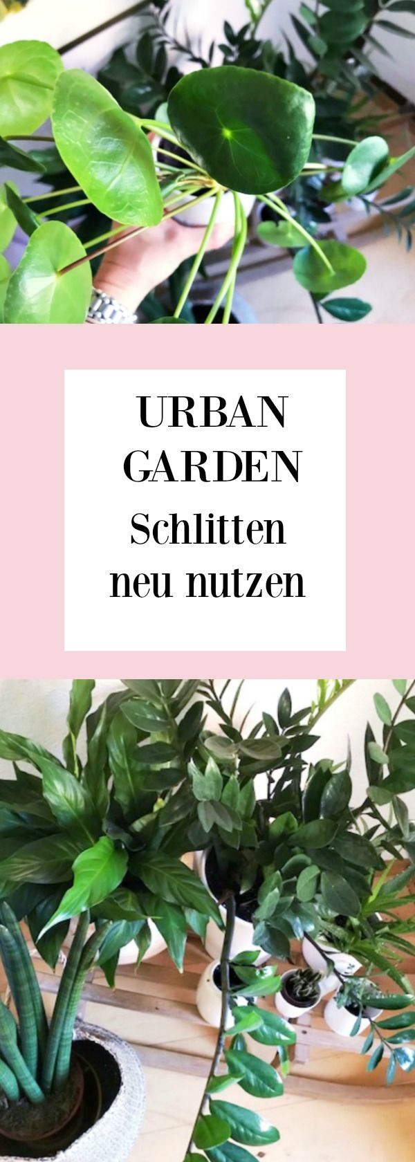 245 besten plants and flowers blogstlove bilder auf for Fliegen in topfpflanzen