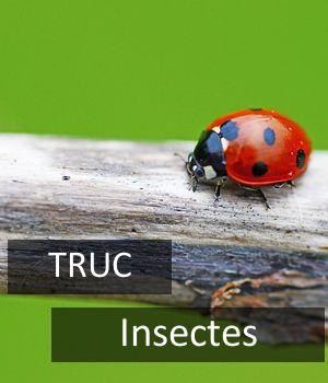 10 trucs pour se débarrasser des mouches sans insecticide