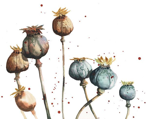 Poppy Seeds by Alison Fennell - Poppy Seeds Painting - Poppy Seeds Fine Art Prints and Posters for Sale