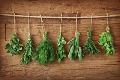 If you love cooking healthy, there is nothing like adding some fresh home-grown herbs into your recipes to add a little flavour and kick. It is something that can make the difference between a mediocre and truly outstanding dish. There is a whole multitude of easy to grow herbs that you can keep on your windowsill, ensuring you have access to fresh cooking ingredients all year-round.