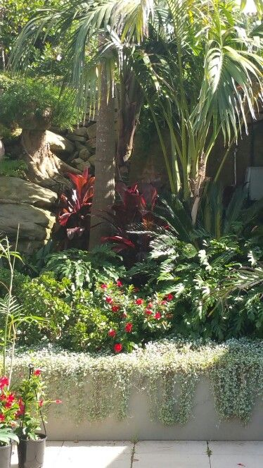 Seaforth tropical garden After