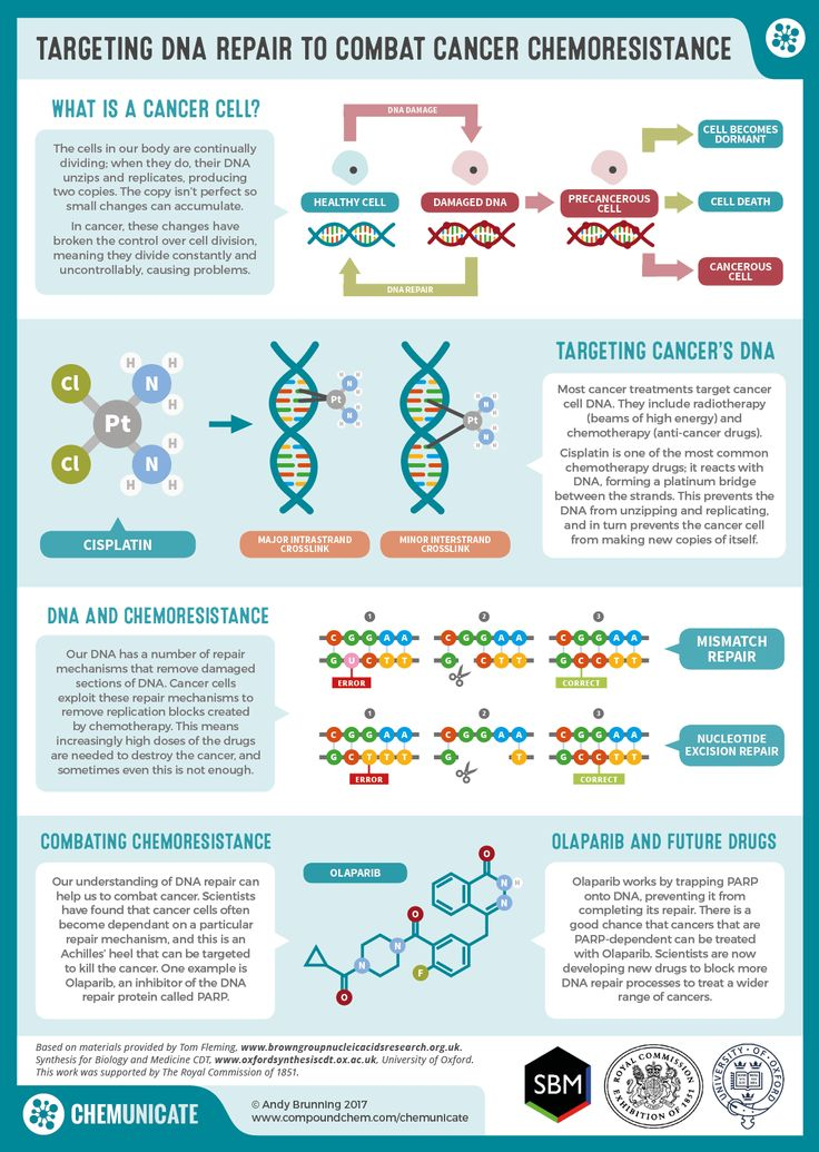 chemistry of cancer The exact cause of pancreatic cancer is yet to be determined however, genetics appear to play a large role, as well as the presence of other risk factors.