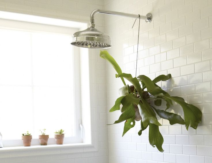 Staghorn fern growing in a coconut shell planter and suspended from a wire hook | Gardenista