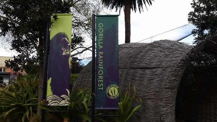 Gorilla forest