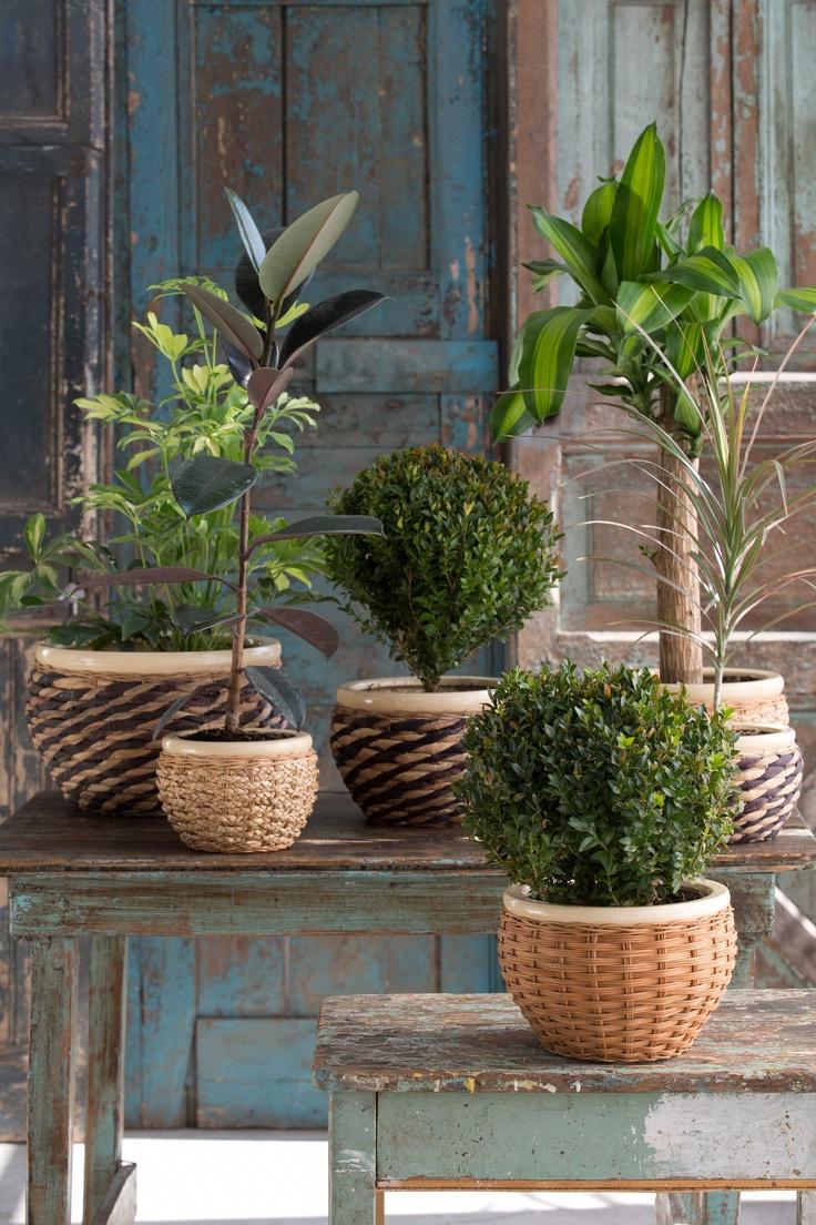 Entrega un toque elegante y natural a tu #Hogar con estos maceteros #Natura.  #Easy #Hogar #Jardin #Estilo #Decoracion #Design