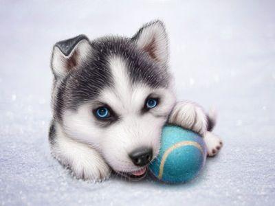 18 mejores imágenes de Perros en Pinterest | Animales lindos ...