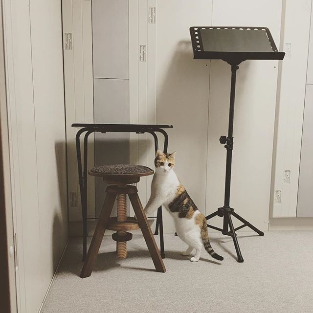 これがアタイの新しいお部屋ね🐱 ちょっと狭くて殺風景やけどまあええわ。 ------ これはマリちゃんのお部屋ではない…。 引っ越ししてから2ヶ月半もかかってようやく防音室を搬入しました。 はー、これでようやく思いっきり練習できる。 #マリー #猫 #三毛猫 #愛猫 #ilovecats #猫のいる暮らし #猫との暮らし #にゃんすたぐらむ #にゃんだふるらいふ #防音室 #アビテックス #練習室 #マリーのお部屋 #ではない #ニャンズは立ち入り禁止なんですけども